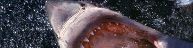 Dokonalý žralok