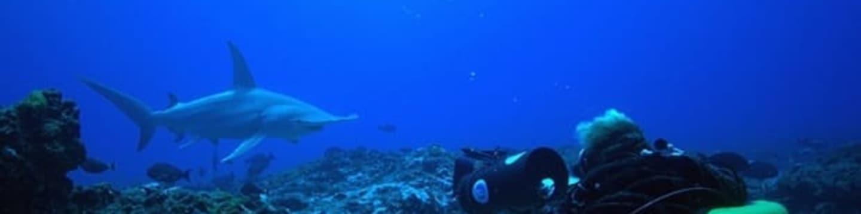Podmořská dobrodružství: Polynéský ráj žraloků