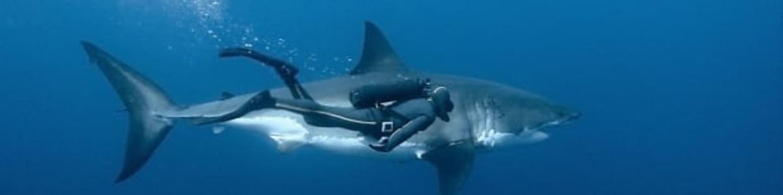 Podmořská dobrodružství: Výprava za žralokem bílým