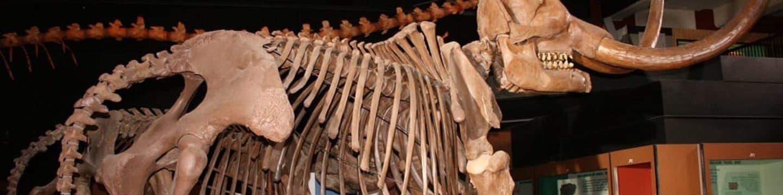 Past na mastodonta