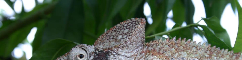 Madagaskar - země chameleonů