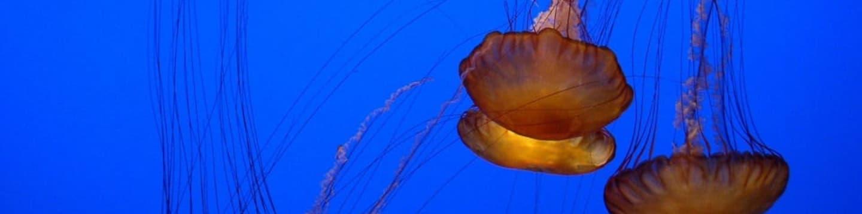 Invaze medúz