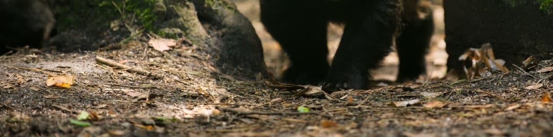 Soukromý život evropských savců: Jezevec lesní