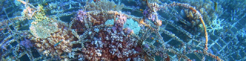 Znovuzrození korálovéhu útesu