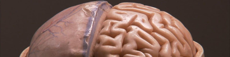 Lidský mozek: Kde sídlí zlo?