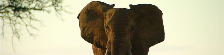 Mezi slony