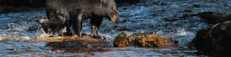 Moksgm´ol: Pátraní po medvědím přízraku