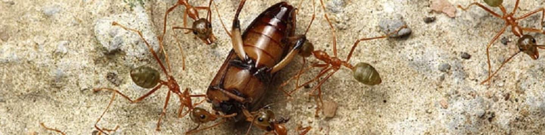 Nelítostné války hmyzu