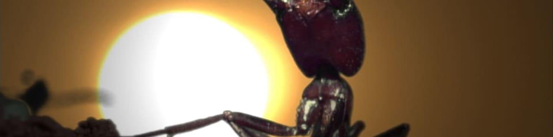 Mravenci útočí