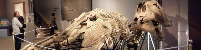 Tajemství dinosauří mumie