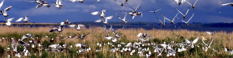 Krásy divokého Pobaltí