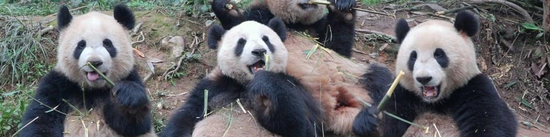Pandí dobrodružství s Nigelem Marvenem