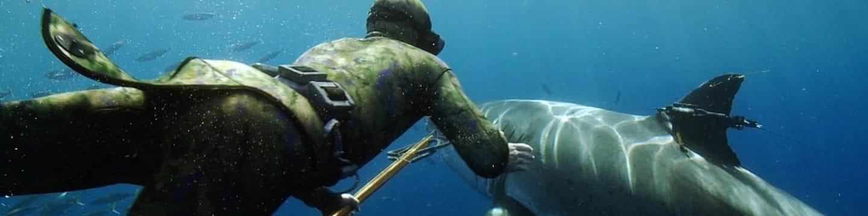 Potápění se žralokem bílým