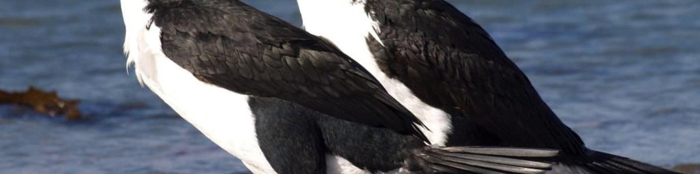 Ráj tučňáků
