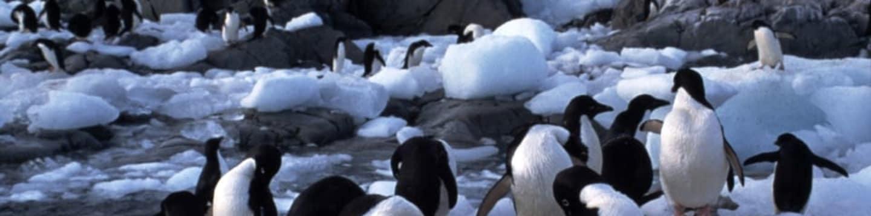 David Attenborough: Příběh tučňáka