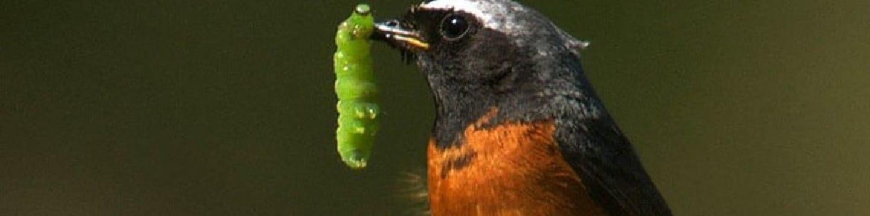 Tajný život ptáků