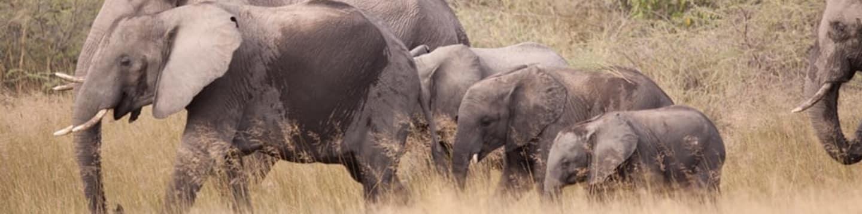 Velká sloní cesta